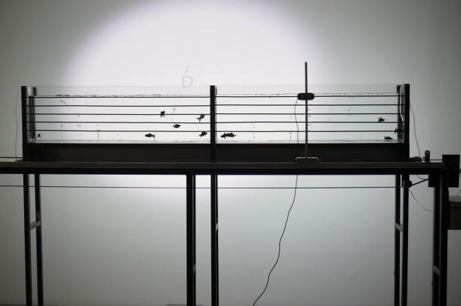어항이 오선지, 물고기가 음표가 되어 음악을 연주하는 작품